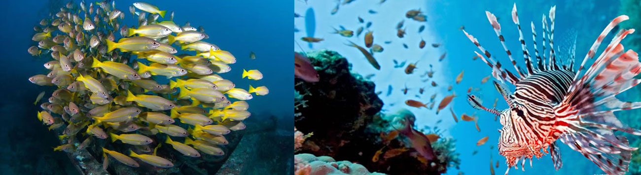 AWARE – Coral Reef Conservation
